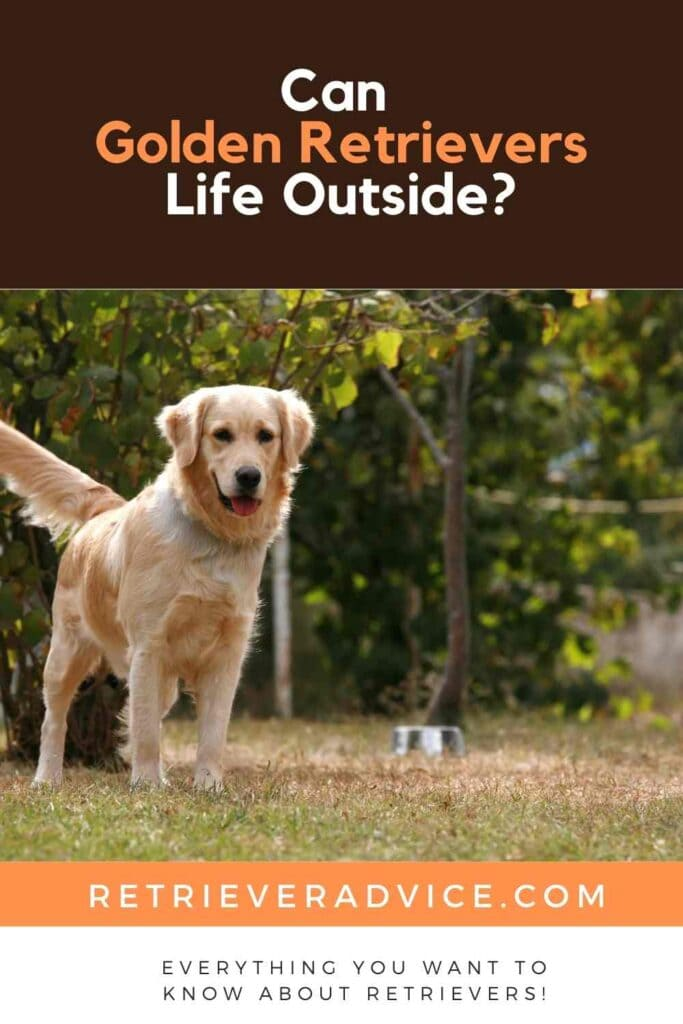 Can Golden Retrievers Life Outside?