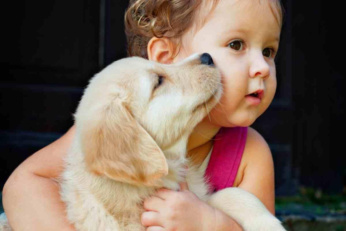 Do Golden Retrievers Like To Cuddle?