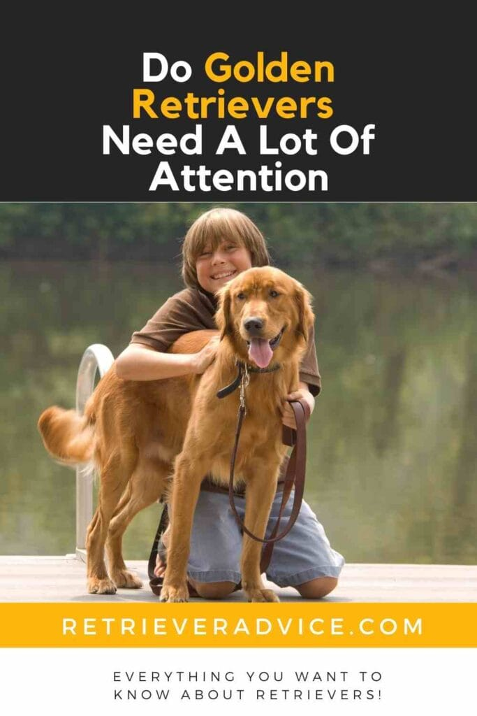 Do Golden Retrievers Need A Lot Of Attention?