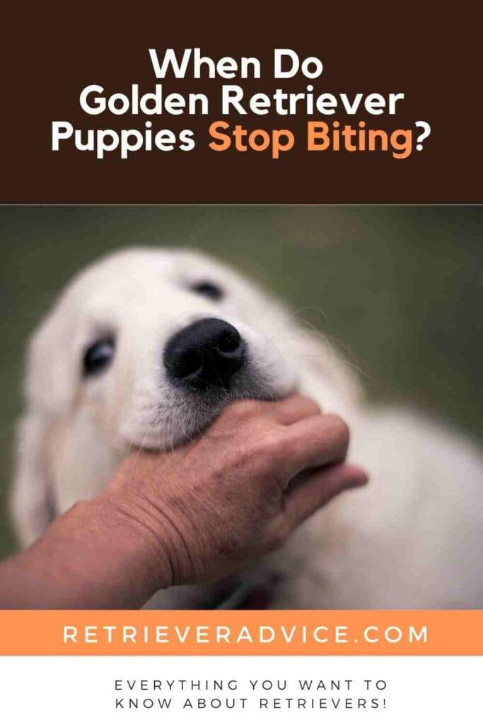 When Do Golden Retriever Puppies Stop Biting?