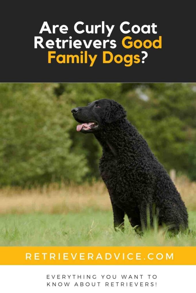 Are Curly Coat Retrievers Good Family Dogs?